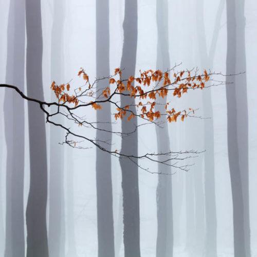 Ze zářijové výstavy fotografií Martina Raka vyroste les – patronem je Tomáš Klus